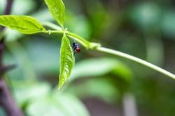 A flies sitting on a long bean leaf inside of a home garden close up