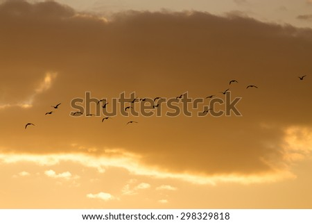 a flock of birds at sunset #298329818