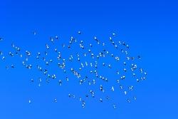 a flock of birds flying over a blue sky