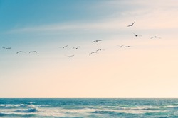 A flock of birds flying over the Pacific Ocean. Blue and turquoise colored sea waves, beautiful cloudy sky on background