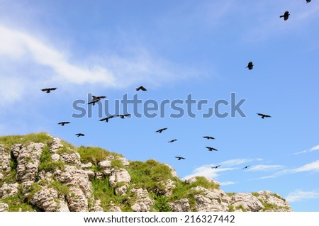 A flock of black birds over the cliff
