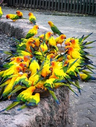 A flock of bright yellow-green parrots