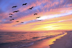A Flock of Brown Pelicans Fly Over the Beach as the Sun Sets