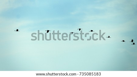 A flock of cranes flies to the south against the blue sky. migratory birds in flight. incredibly beautiful autumn picture. birds fly home in the spring. #735085183
