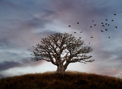 A flock of crows flying away from the silhouette of a lone barren tree on a hilltop against a candy colored sunset sky.
