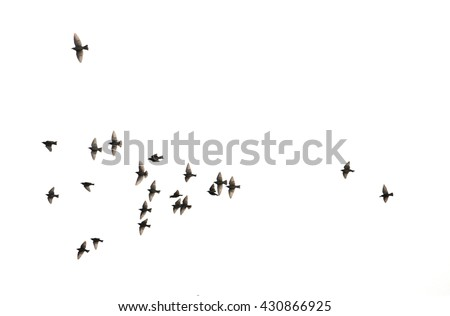 a flock of flying birds.  #430866925
