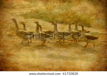 a flock of geese on the grunge background - stock photo
