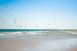 A flock of gulls over the blue sea