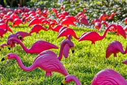 A flock of plastic flamingos on a lawn.