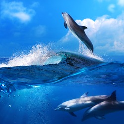 a flock of playful dolphins swimming underwater and one leaping out from big sea surfing wave