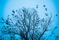 A flock of ravens in the branches of a tree, horror scenes