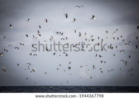 a flock of seabirds flying together over the ocean Stockfoto ©