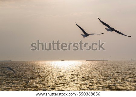 A flock of seagull birds flying over the sea in the sunset. #550368856
