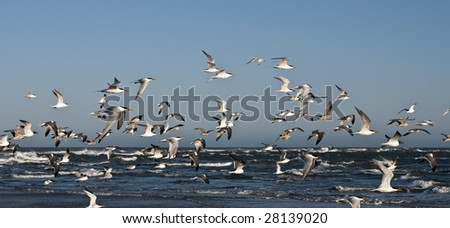 A flock of seagulls flying at the beach