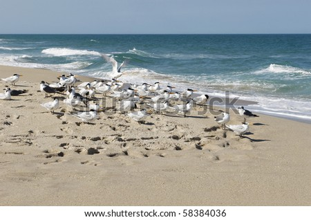 A flock of Seagulls on the seashore