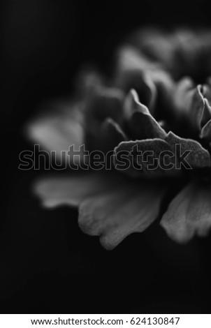 A flower #624130847