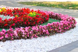 A flower bed of flowers in the city park. Red and pink begonia and marigold with artificial decorative white stone, landscape design