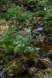 A flower bush near a small river streaming through the mossy rocks