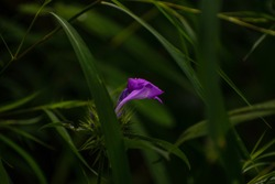 A flower inside a cage of grass  captured by Nikon D3500 with 70-300mm VR lens 1/60 sec, f6.3, 300mm