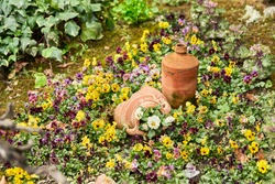 A flowerbed of multicolored tricolor violas. Decorative flower pots are placed in the center of the flowerbed. Copy space.