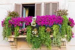 a Flowery balcony in a city street