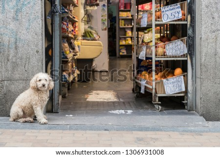 A fluffy dog waits for his master tied to the door of a store. Translation: mandarin offer 0.59 Euros / kg, apple offer 0.99 Euros / kg, offer oranges 0.59 Euros / kg