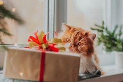 A fluffy ginger cat lies on a knitted mat next to a gift box with a red and green bow and a Christmas tree.