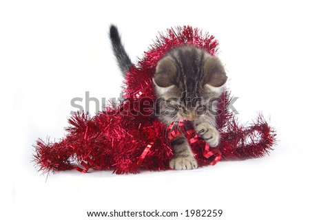 A fluffy kitten playing in holiday decorations. Slight motion blur on playing kitten.