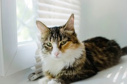 A fluffy mongrel cat lies on the windowsill.