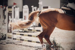 A fluffy tail fluttering in the wind and the croup of a sorrel horse galloping across a sandy, brightly lit field for show jumping competitions
