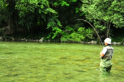 a fly-fisherman catches a trout in clear water