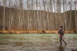 A fly fisherman hooked into a big fish on the Kalum River in the spring, British Columbia, Canada, with the rod bent and aspen woodland in the background