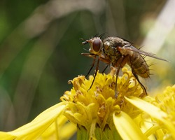 A fly on a yellow flower.