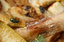A fly on rotting fruit. Rotting fruit. A pile of rotting kitchen waste with fruit waste. Macro photography. Shallow depth of field.