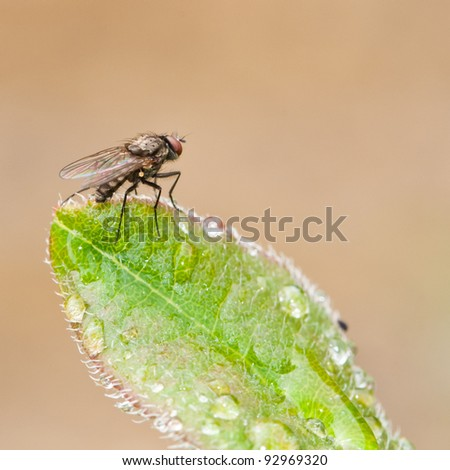 A fly perches on the tip of a wet green leaf.
