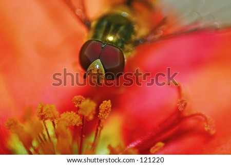 A flying bee on a colorfull flower.