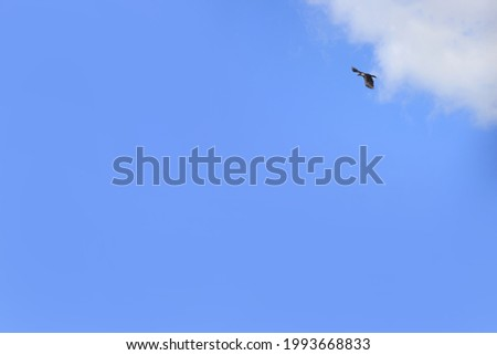A flying vulture in the blue sky with clouds.