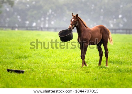 A foal playing with food inside pasture Сток-фото ©