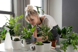 A focused woman in an apron grows flowers and herbs in her home garden. Gardening concept