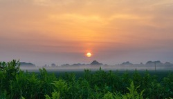 A foggy dawn with the sun in the background and green plants in the foreground