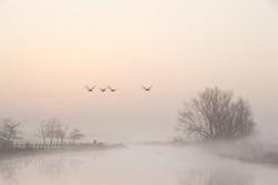 A foggy morning in a typically Dutch landscape