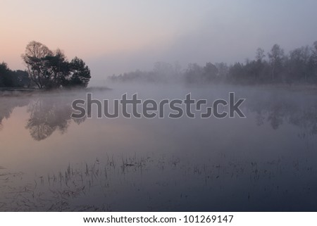 "A foggy sunrise on the ""Strabrechtse Heide"", a nature reserve near Eindhoven, the Netherlands."