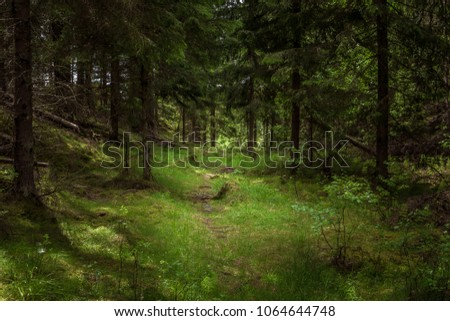 A footpath in a green forest in the summer, in Sweden Scandinavia. Beautiful trail among green pines. The picture was taken in Tyresta national park. Swedish northern nature background.