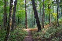 A footpath in the forest with the sun shining through the trees, Great Smoky Mountains National Park, Tennessee