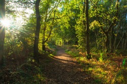 A footpath travelling through the ancient woods of Sherwood Forest, Nottingham.