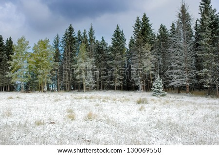 A forest covered in snow in New Mexico