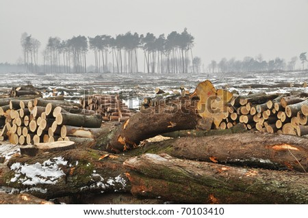 A forest cut down during winter.