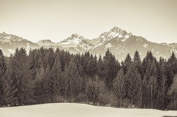 A forest in the Austrian Alps. Sepia monochrome look
