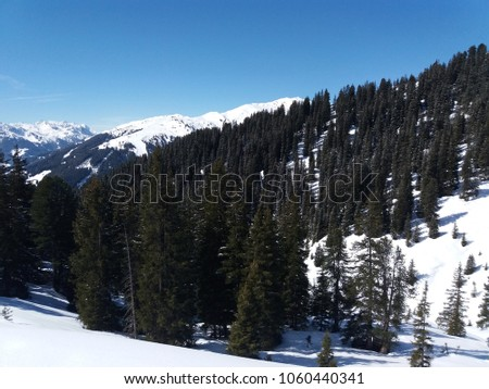 A forest on top of a mountain ridge between snow nd ski slopes. The trees grow on a slope that leeds into a valley. Above there is a clear blue sky. #1060440341
