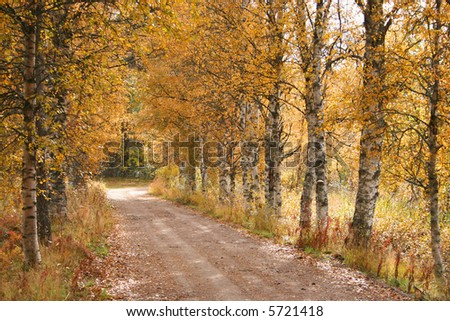 A forest path during fall